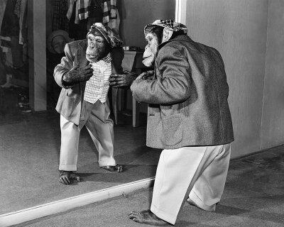 Черно-белые фотообои Шимпанзе в костюме