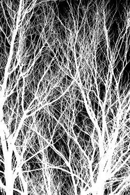 Черно-белые фотообои Ветки