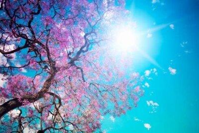 Фотообои с природой сакура на фоне солнца