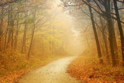 Фотообои с природой туман глубокой осенью