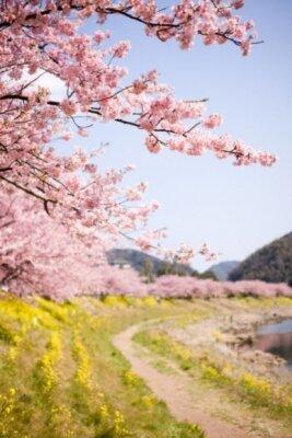 посадка из деревьев сакуры