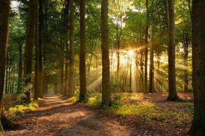 освещенная солнцем тропинка в лесу