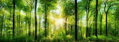 Фотообои Панорама живописного леса