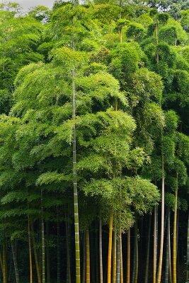 Кроны бамбука