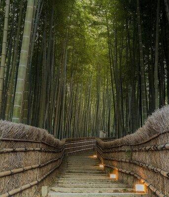 Бамбуковый заповедник