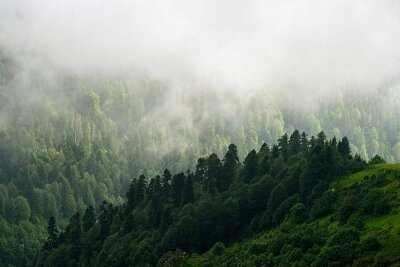 Деревья в тумане