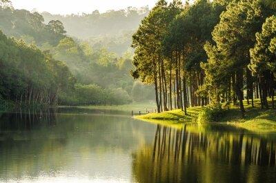 фотообои лес у реки