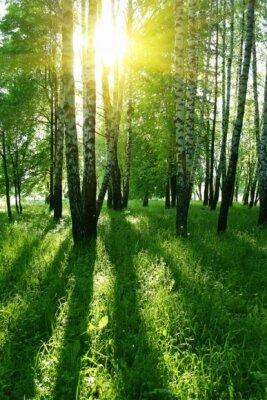 Фотообои с природой солнце над березами