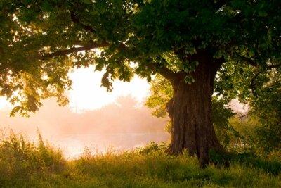 Фотообои с природой старый могучий дуб