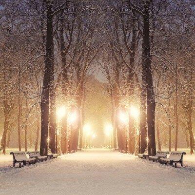 Фотообои вечерний парк