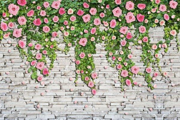 Фотообои Розы на стене