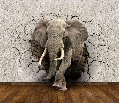 Фотообои Слон